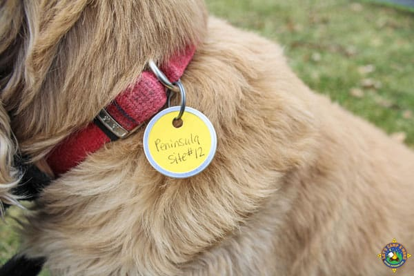 temporary custom identification tag on a dog