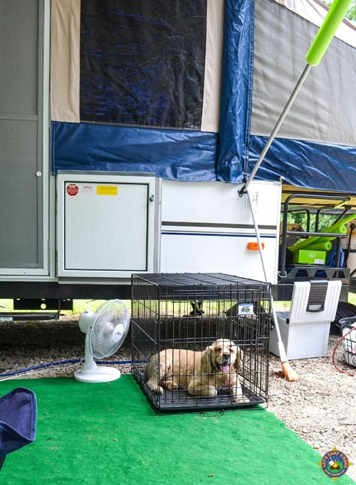 dog in his crate in the shade and with a fan while camping
