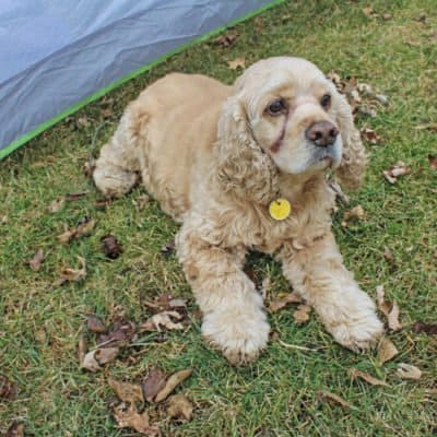Tips for Camping with Dogs + DIY Dog Tags