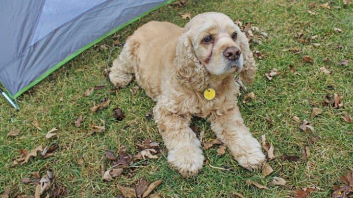 Tent Pet ID Tag