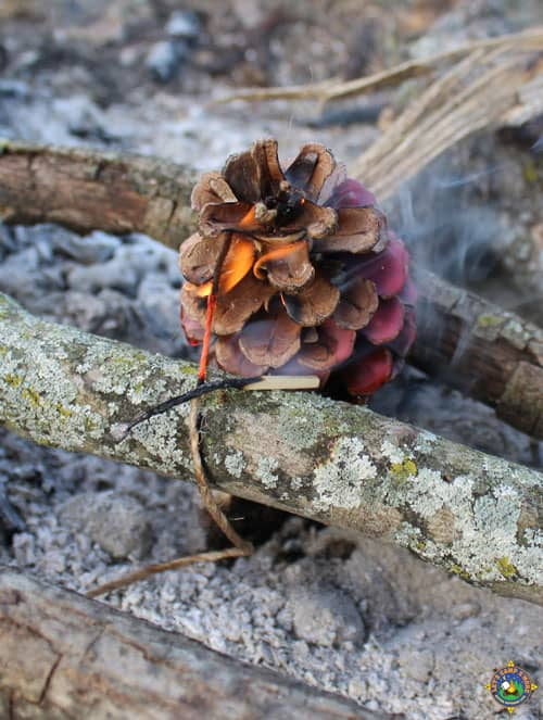 a pinecone fire starter being lit