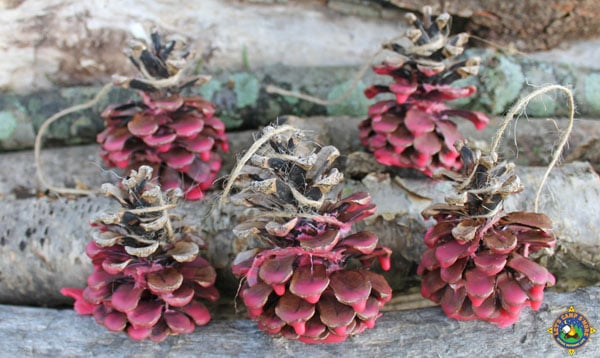 pinecone fire starters on logs