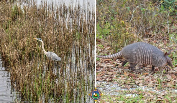 a collage with a heron and an armadillo