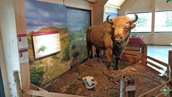 Stuffed Wisent - European Bison