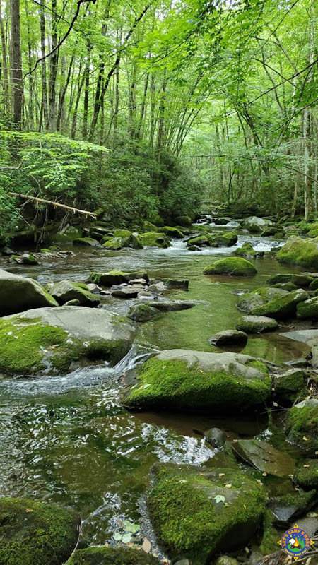 stream in Great Smoky National Park